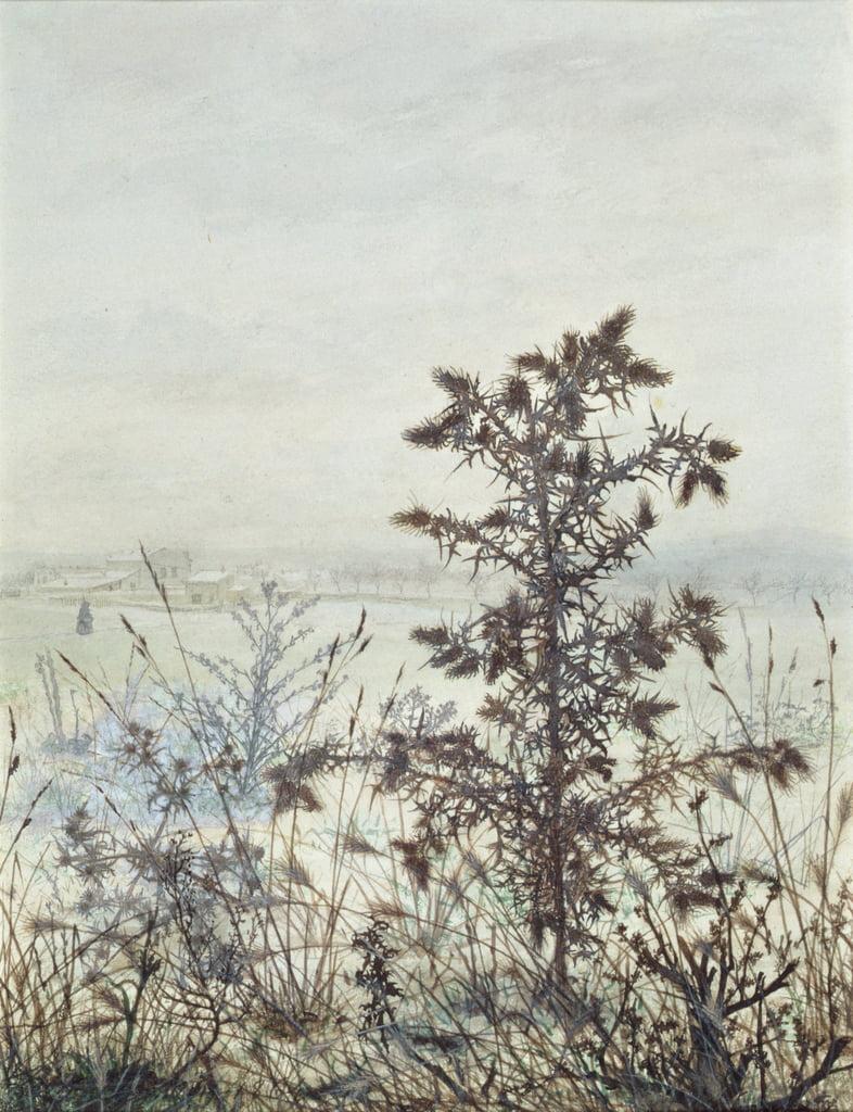 Chardons et mauvaises herbes, 1864 (wc, bodycolour, stylo et encre et crayon sur papier) - Léon Bonvin