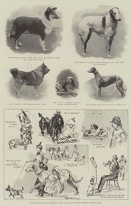 Au Ladies &39;Kennel Association Show dans les Royal Botanic Gardens, Regent&39;s Park - Ralph Cleaver