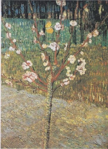 Blossoming Amandier - Vincent van Gogh