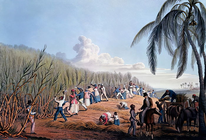 "Esclaves coupant la canne, de ""Dix vues sur l&39;île d&39;Antigua"", 1823 - William Clark"